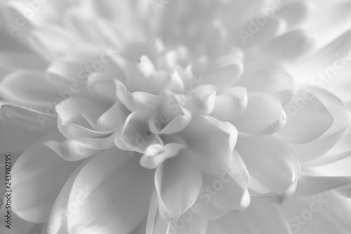 White Flower Petals Background