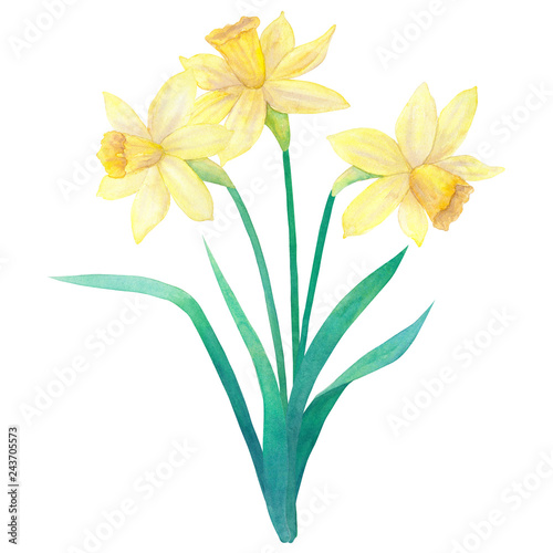 Photographie  Spring bouquet of bright yellow daffodils or narcissus and leaves