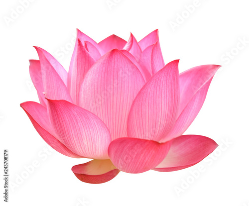 Papiers peints Fleur de lotus Lotus flower on white background