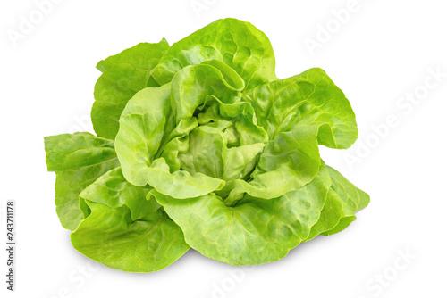 Kopfsalat isoliert, Lactuca sativa