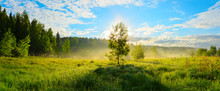 Panorama Of Foggy Lawn With Growing Trees On A Background Of Sunrise Sky.