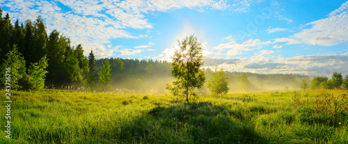 Fototapeta Panorama of foggy lawn with growing trees on a background of sunrise sky.