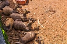 Timor Deers Family
