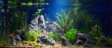 Planted Tropical Fresh Water A...