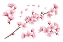 Sakura Realistic Set