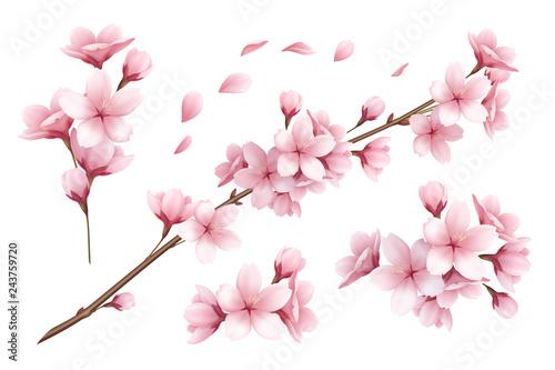 Sakura Realistic Set Wallpaper Mural