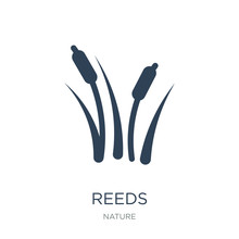 Reeds Icon Vector On White Bac...