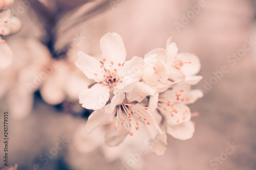 Fototapeta vintage background little flowers, nature beautiful, toning design spring nature, sun plants obraz na płótnie
