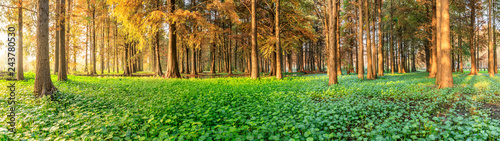 Montage in der Fensternische Honig Beautiful autumn forest and green aquatic plants scenery,panoramic view