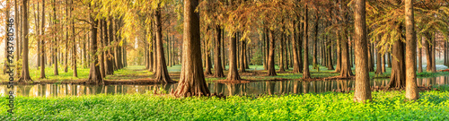 Tuinposter Herfst Beautiful autumn forest and green aquatic plants scenery,panoramic view