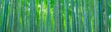 Fototapeta Bambus - 竹林