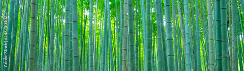 La pose en embrasure Bamboo 竹林