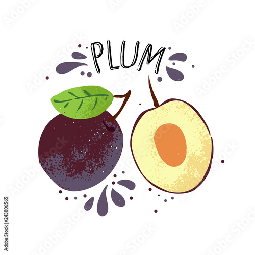 Photo Vector hand draw plum illustration