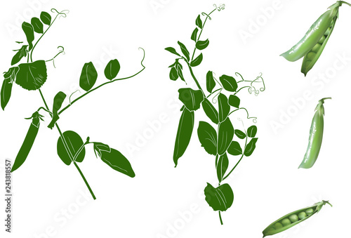 Pinturas sobre lienzo  group of green peas isolated on white