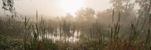 Dawn In The Marshland. Countryside. Banner For Design.