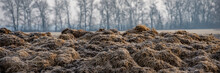 Frozen Cow Dung In The Field.  Web Banner.