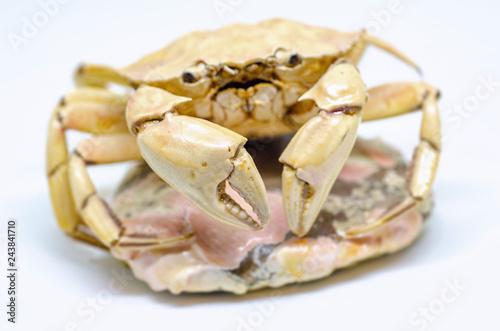 Crab skeleton isolated on white background