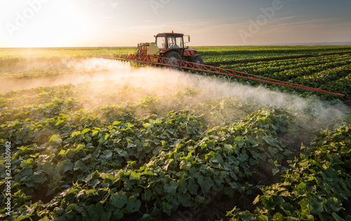 Fotomural  Farmer on a tractor with a sprayer makes fertilizer for young vegetable