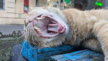 Yawning Cat On Bench