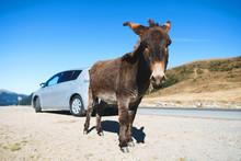 Donkey At Silver Car