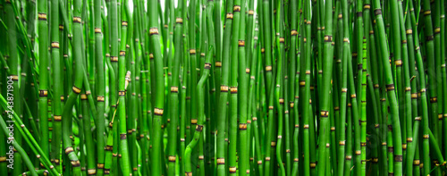 Spoed Foto op Canvas Groene Beautiful bamboo texture background. Green asian plants.