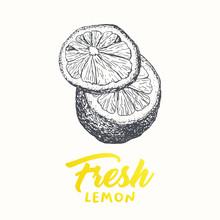 Fresh Lemons Vector Banner Template. Sketch Fruit Clipart. Sliced Lemons Engraving Style Drawing. Handwritten Calligraphy, Lettering. Isolated Yellow Citrus Color Design Element. Shop Sign, Store Logo