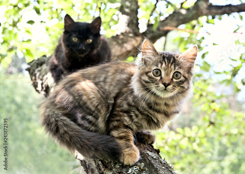Fotografie, Obraz  Scared tabby and s kittens are sitting on a branch on apple tree