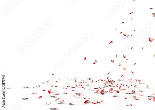 Fotobehang Macrofotografie Many rose petals fall on the floor