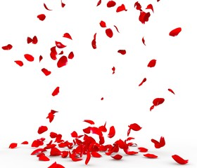 Many rose petals fall on the floor