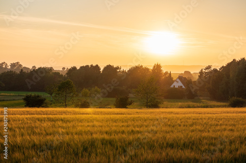 Fotobehang Cultuur The sunset over wheat field in Germany