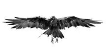 Drawn Crow Bird In Flight From...