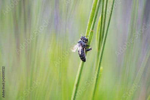 Fotografía  Insecto sobre los campos de lavanda