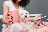 Fototapeta Zwierzęta - Portrait funny sweet moments of domestic pets chilling with young woman in pajama on bed. Little funny dog showing tongue to camera, girl with cup of tea, chatting on phone