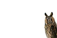 Eared Owl On A White Backgroun...