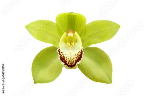 Foto auf Gartenposter Orchideen Green Cymbidium Orchid Flower Isolated on White Background