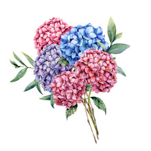 Watercolor Elegance Bouquet With Hydrangea. Hand Painted Pink, Blue And Violet Flowers With Eucalyptus Leaves And Branch Isolated On White Background. Nature Botanical Illustration For Design, Print