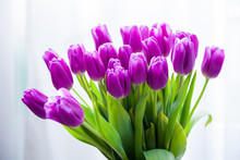Bunch Of Purple Tulips