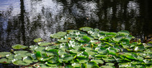 Aquatic Garden With Fresh Wate...