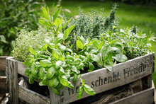 Pots Of Assorted Fresh Herbs In A Wooden Crate