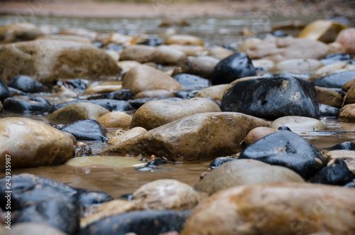 Canvas Prints Forest river Stones and Rocks in River