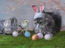Easter Still Life With  A Kitt...