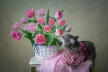 Spring Pictorial Photo With Pr...