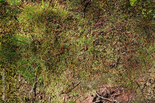 Fotomural Close up high resolution surface of forest ground with nuts and moss