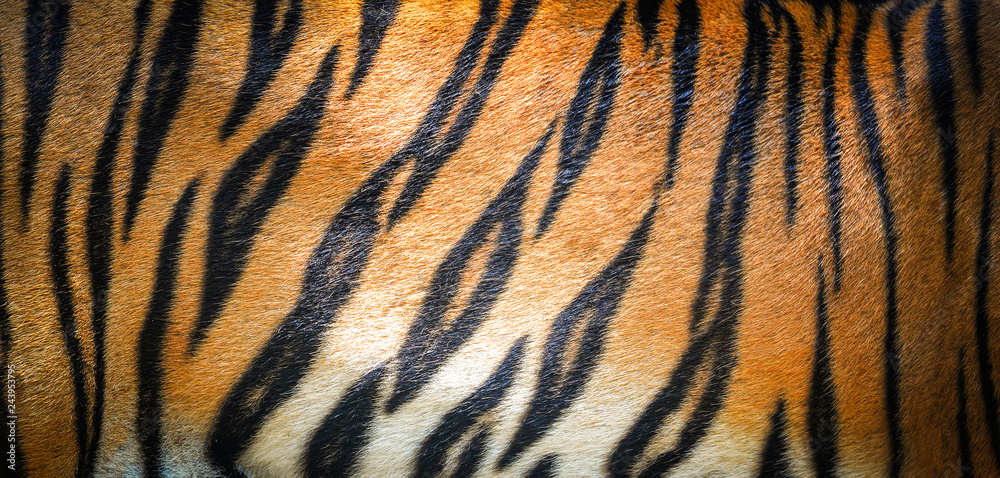 Fototapeta Tiger pattern background / real texture tiger black orange stripe pattern bengal tiger
