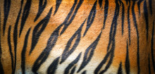 Tiger Pattern Background / Rea...