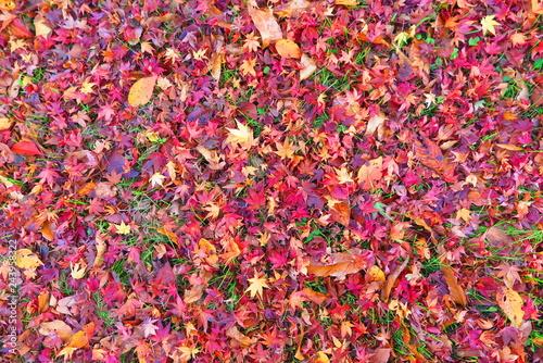 紅葉の落ち葉の風景17