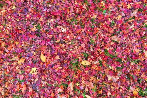 紅葉の落ち葉の風景16