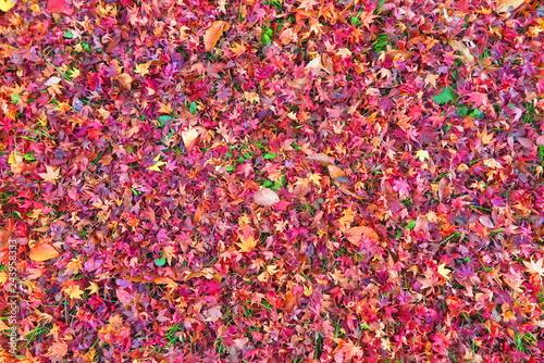 紅葉の落ち葉の風景15