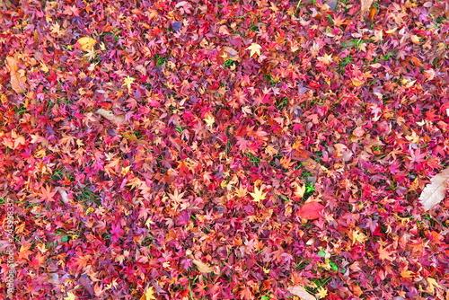 紅葉の落ち葉の風景14