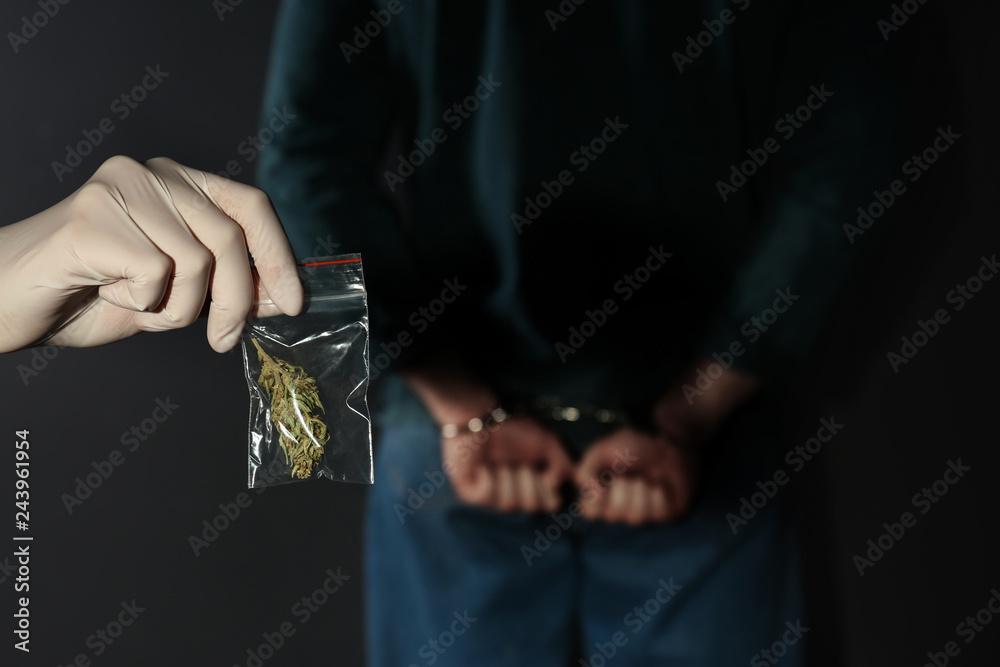 Fototapeta Police worker holding hemp in plastic bag near arrested drug dealer on color background